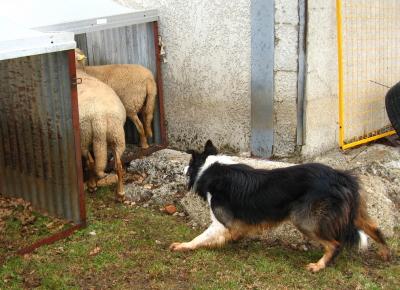 présentation de JUSS, chien traumatisé  - Page 4 Img_9517