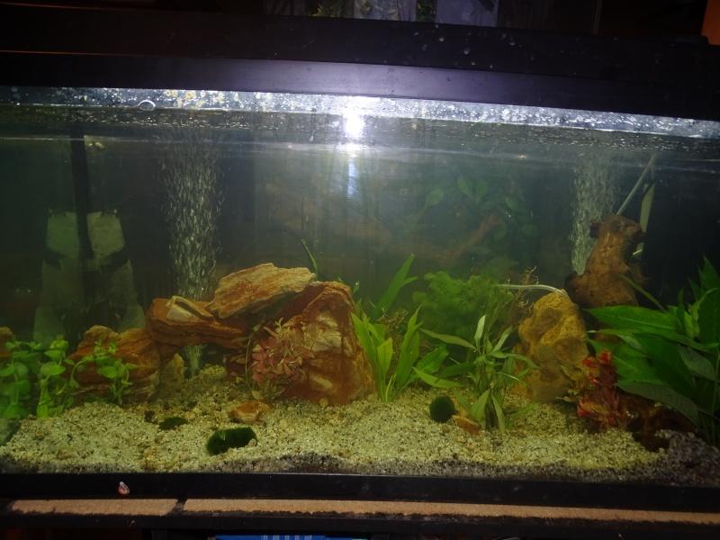aquarium 200l Dsc00810