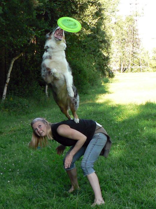 Вес собаки и анатомия для работы/спорта - Страница 4 Q110