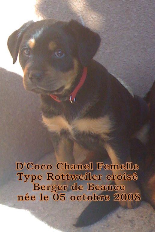 Apache, Nina, D'coco chanel 08311