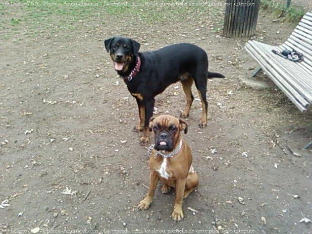 Apache et Nina 39082510