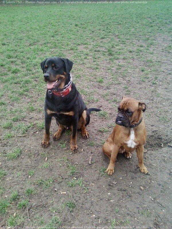 Apache et Nina 40044112