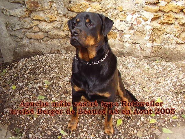 Apache, Nina, D'coco chanel 45971213