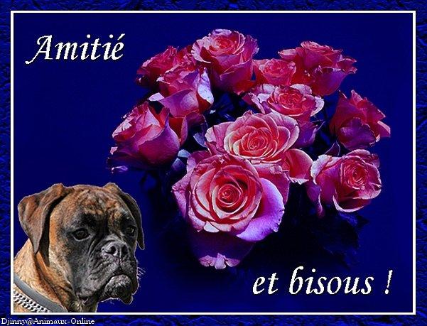 VOS HUMEURS VOS BONJOURS VOS BONSOIRS - Page 3 Amitie11