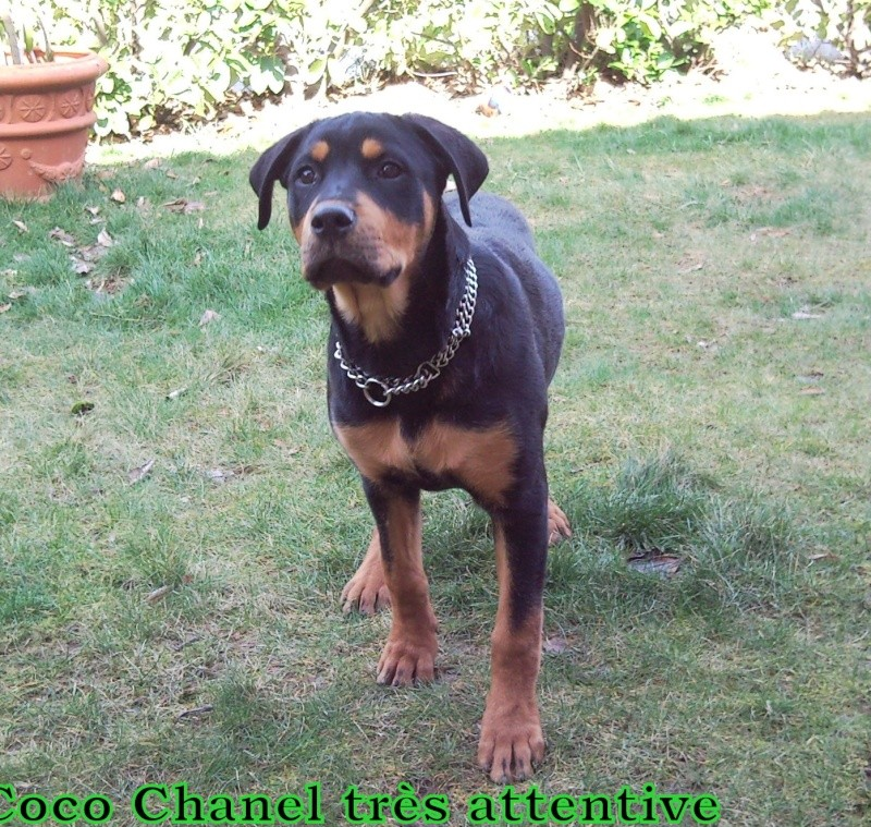Apache, Nina, D'coco chanel Snc00167