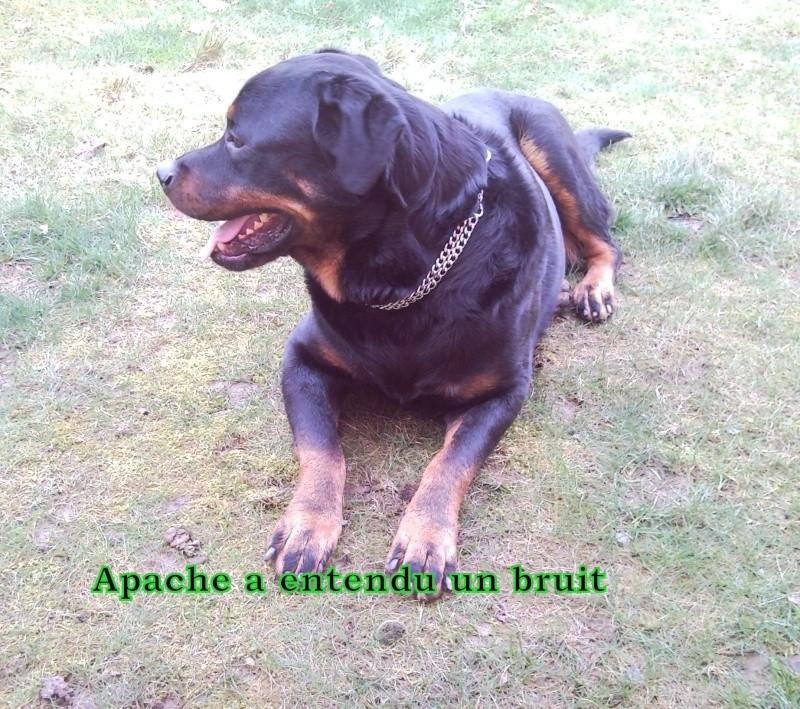 Apache, Nina, D'coco chanel Snc00169