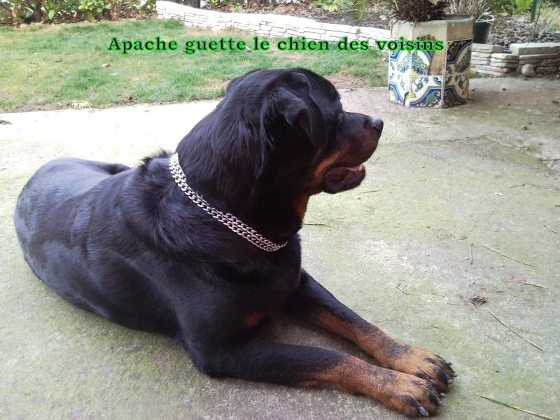 Apache, Nina, D'coco chanel Snc00171