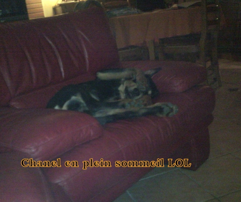 Apache, Nina, D'coco chanel Snc00172