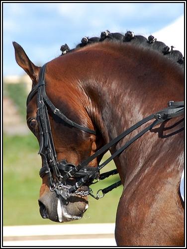 """• Mission """"création de chevaux"""". - Page 3 Wonder10"""