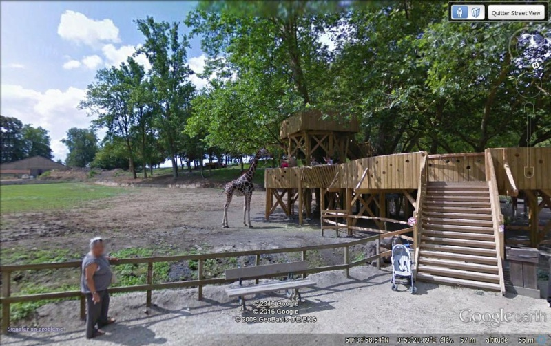 STREET VIEW : Les animaux - Page 9 Girafe10