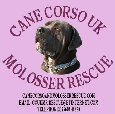 CANE CORSO UK & MOLOSSER RESCUE FORUM