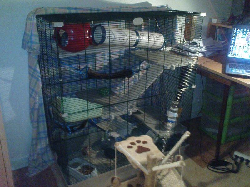 La cage SAMO Dsc03810