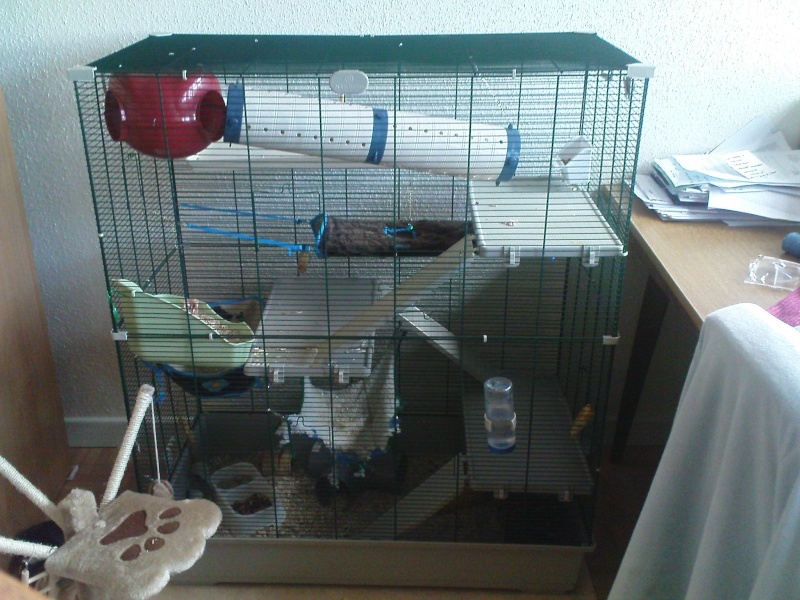 La cage SAMO Dsc04010