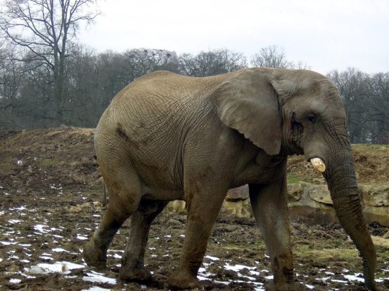 Zoo de Thoiry Thoiry10