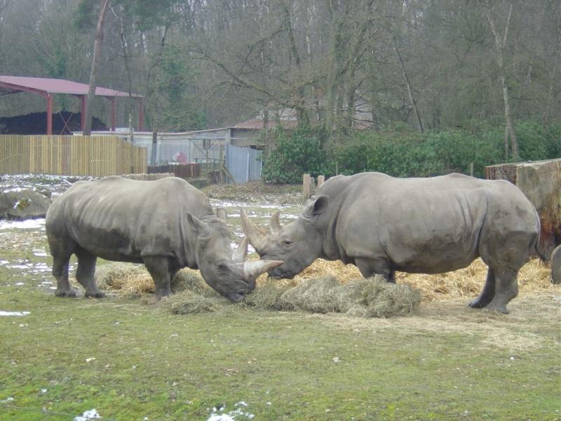 Zoo de Thoiry Thoiry13