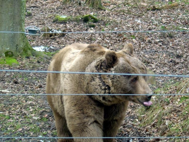 Zoo de Thoiry Thoiry14