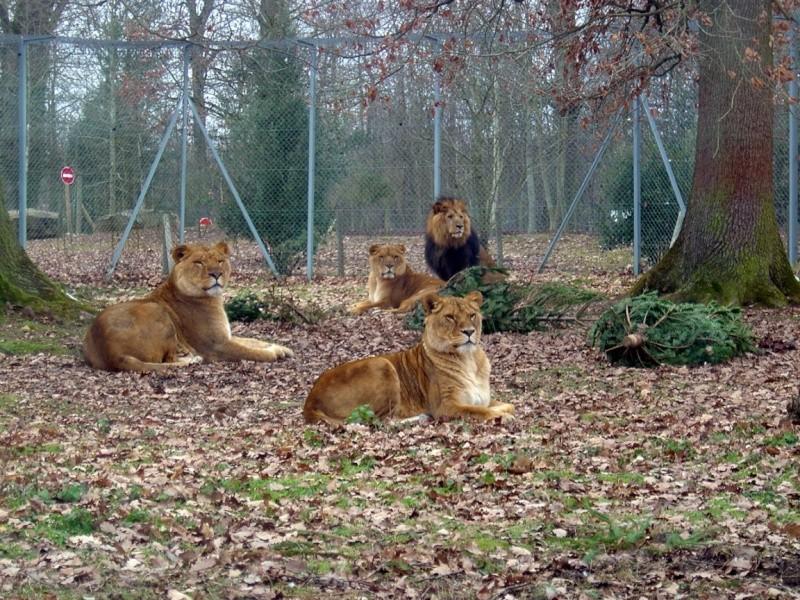 Zoo de Thoiry Thoiry17