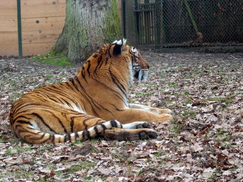 Zoo de Thoiry Thoiry20
