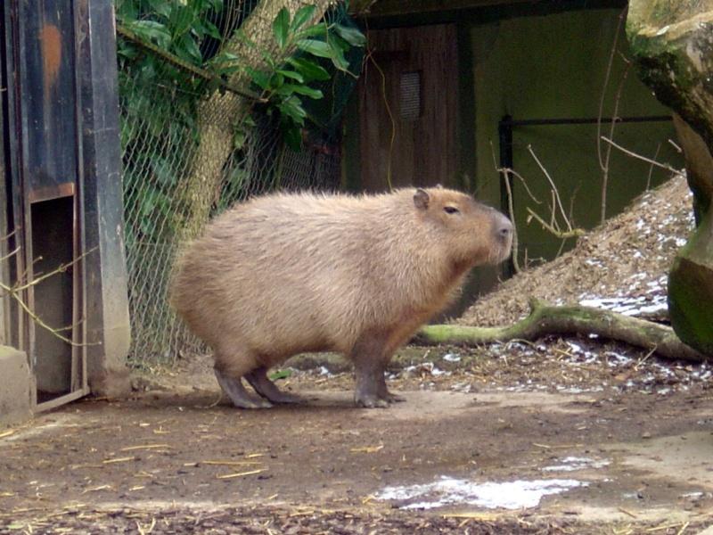 Zoo de Thoiry Thoiry21