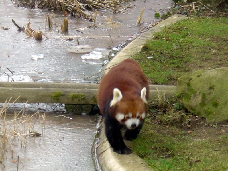 Zoo de Thoiry Thoiry22