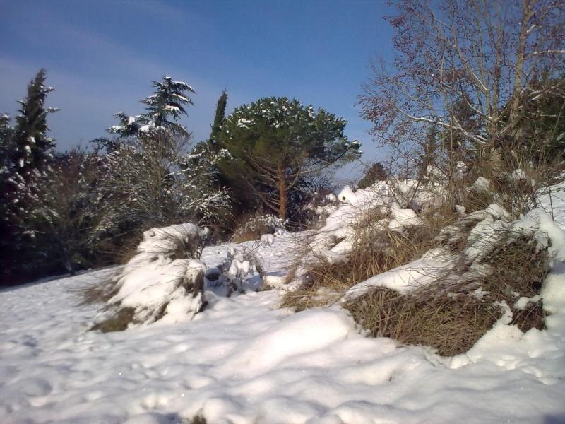 Touraine sous la neige 04122010