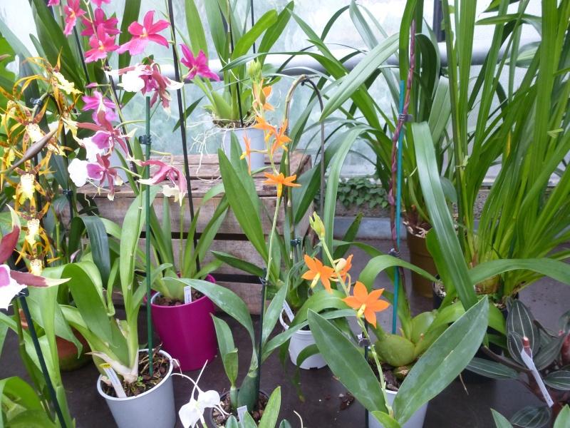 Les Orchidées du Val d'Yerres - Brunoy (91) Encycl10
