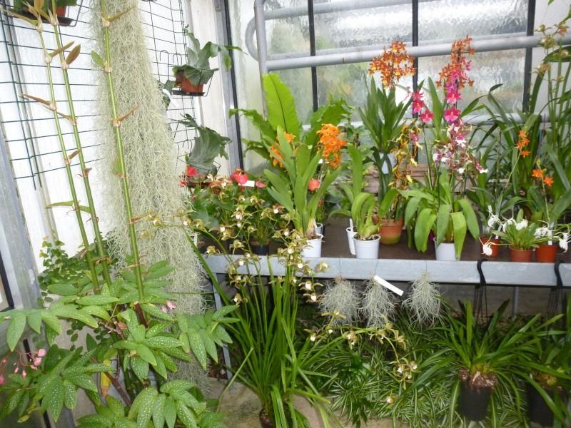 Les Orchidées du Val d'Yerres - Brunoy (91) P1160911