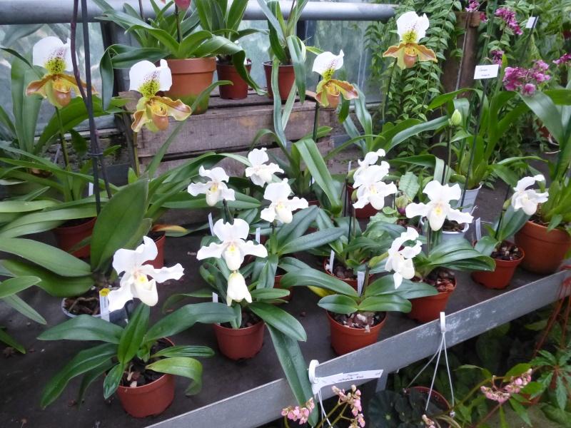 Les Orchidées du Val d'Yerres - Brunoy (91) P1160912