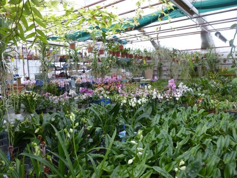 Am Orchidées à Grisy-Suisnes (77)  P1170010