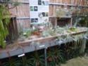 Les tillandsias des orchidées du val d'Yerres  P1160925