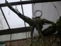 Les tillandsias des orchidées du val d'Yerres  T_sele10