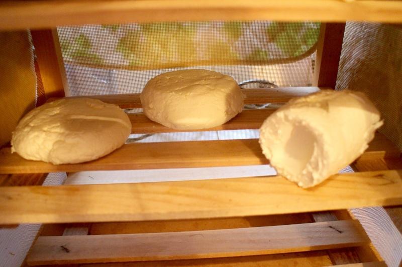 fromage chevre et vache Img_7015