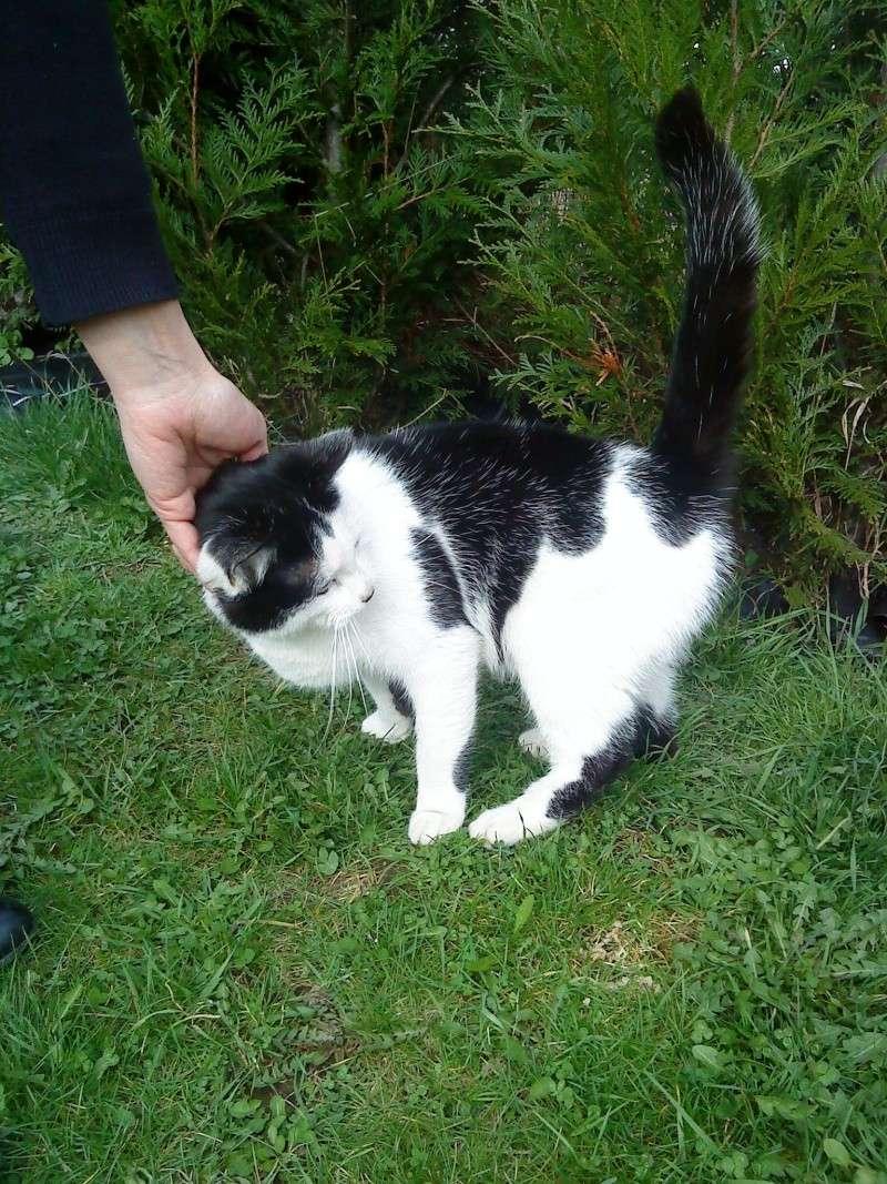 3 chatons nés à la rue à adopter Jjj_1210