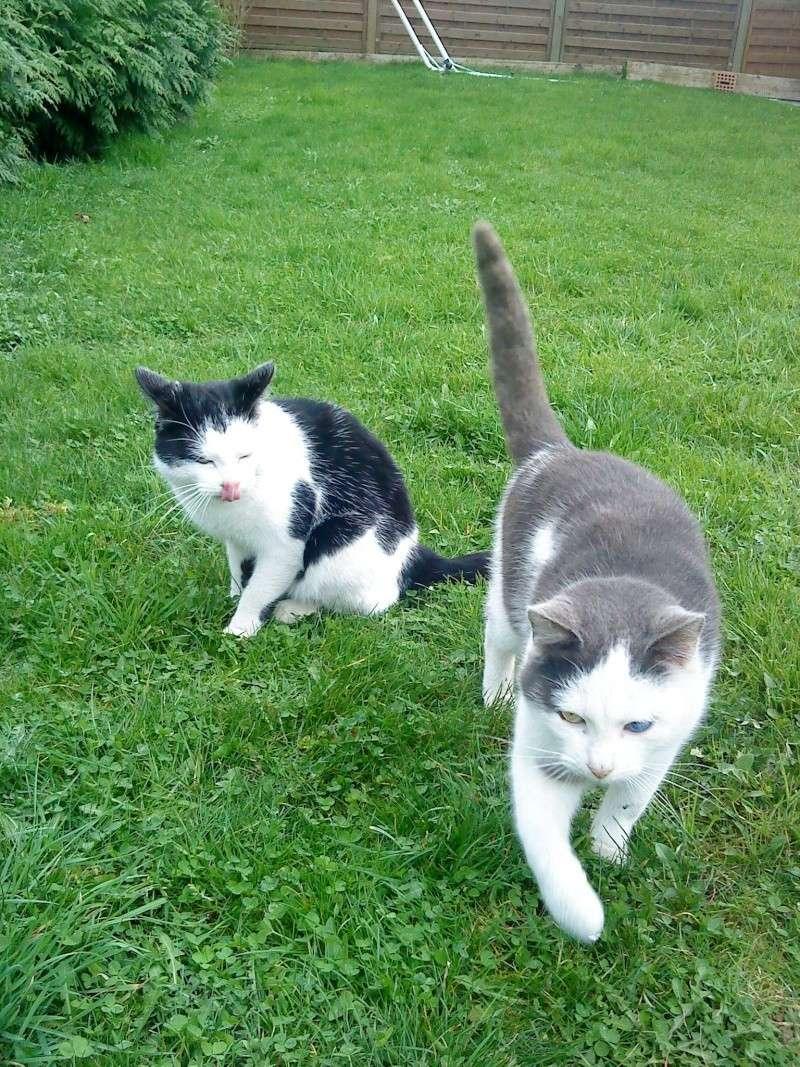 3 chatons nés à la rue à adopter Jjj_1311