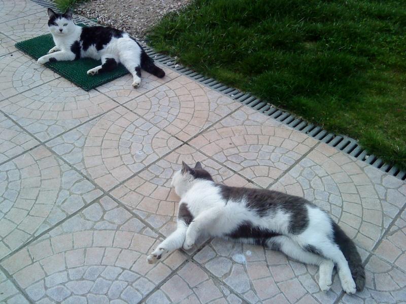 3 chatons nés à la rue à adopter Jjj_1312