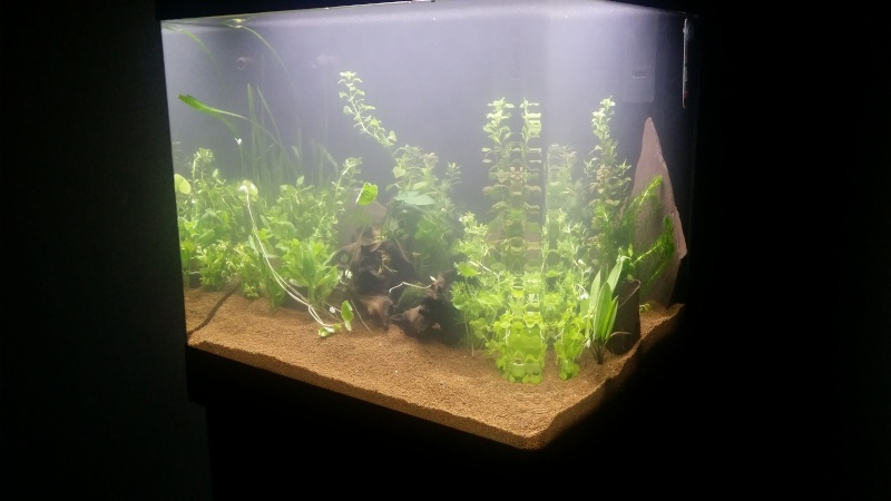 Du grand au petit,  10/100... Mon Green River 120 Plants10