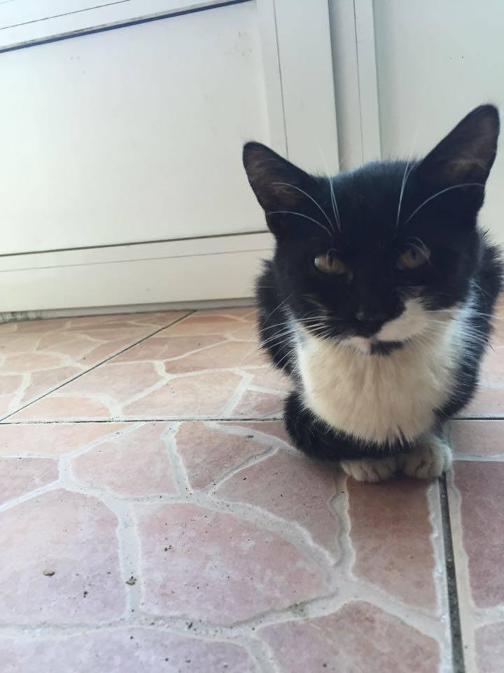 KITZY, chaton femelle née env Juillet 2015, chez Florin - adoptée en Roumanie Chat10