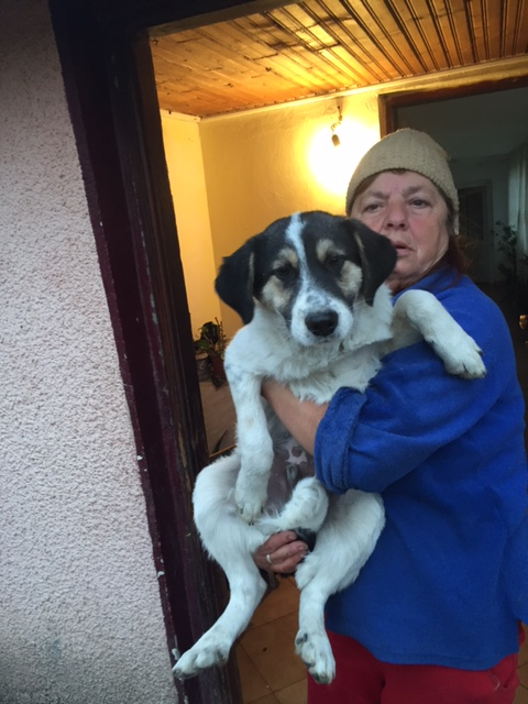 HELIOT - chiot x mâle né en juin 2015, taille moyenne - (CARMINA Bucarest) DECEDE Img_4910