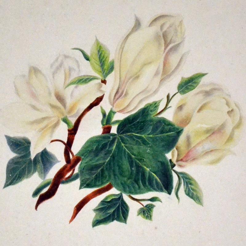Pierre-Joseph Redouté, « Dessinateur et peintre du cabinet de la Reine » Botani10