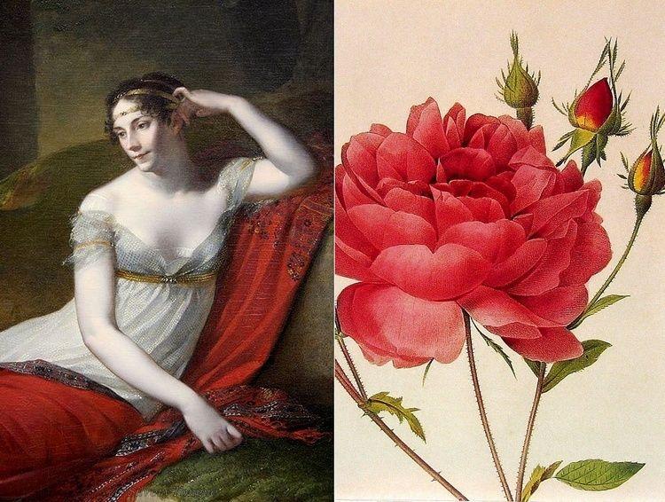 Pierre-Joseph Redouté, « Dessinateur et peintre du cabinet de la Reine » Josyph10