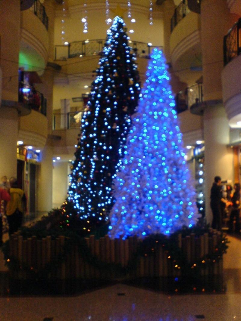 cHristmas tRees in siBu... Dsc00510