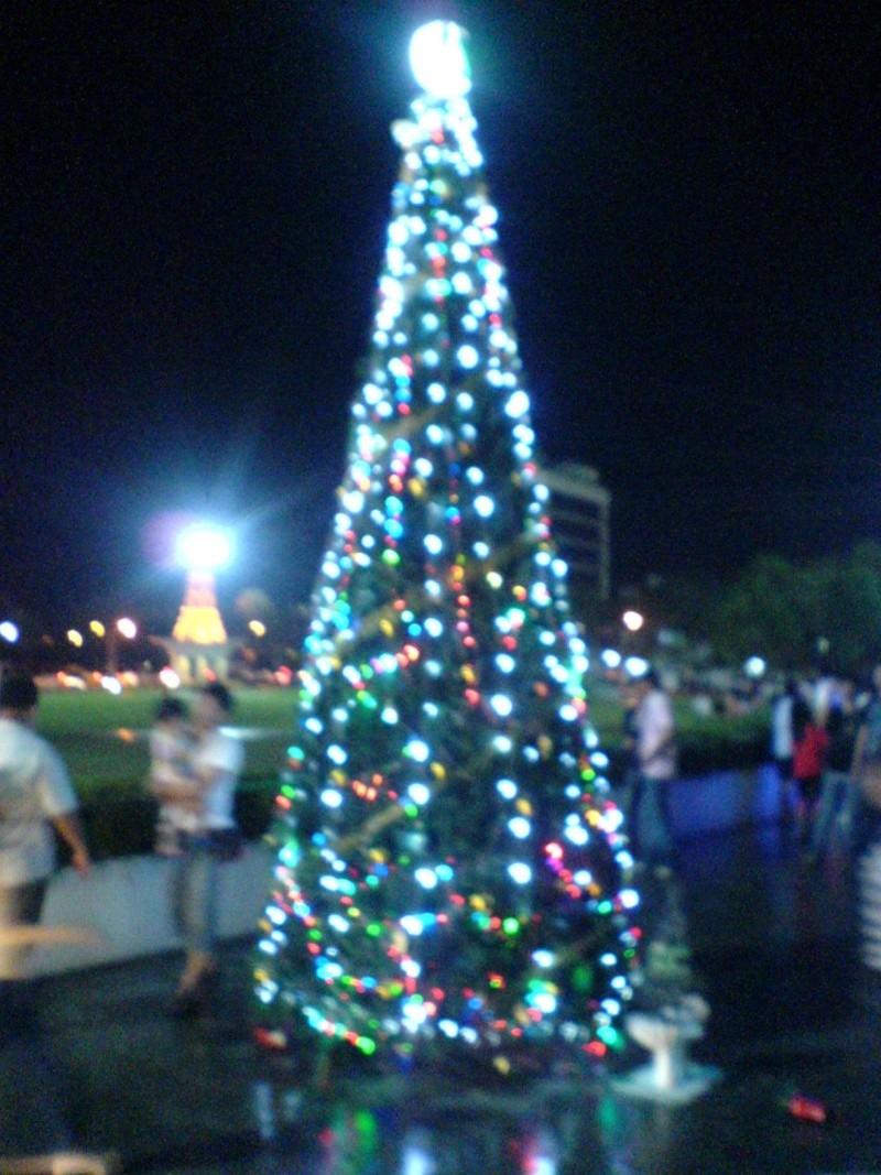 cHristmas tRees in siBu... Dsc00611