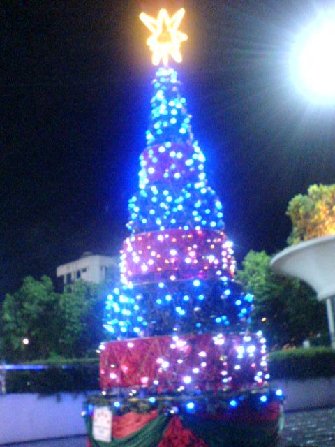 cHristmas tRees in siBu... Dsc00621