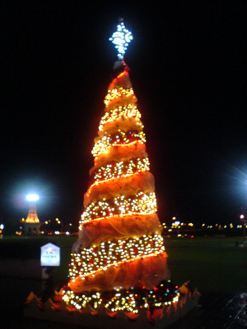 cHristmas tRees in siBu... Dsc00622