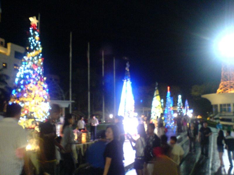 cHristmas tRees in siBu... Dsc00623