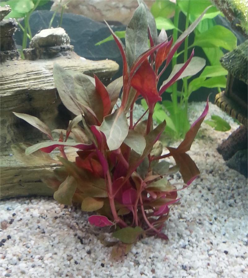 Plante tristounette Plante15