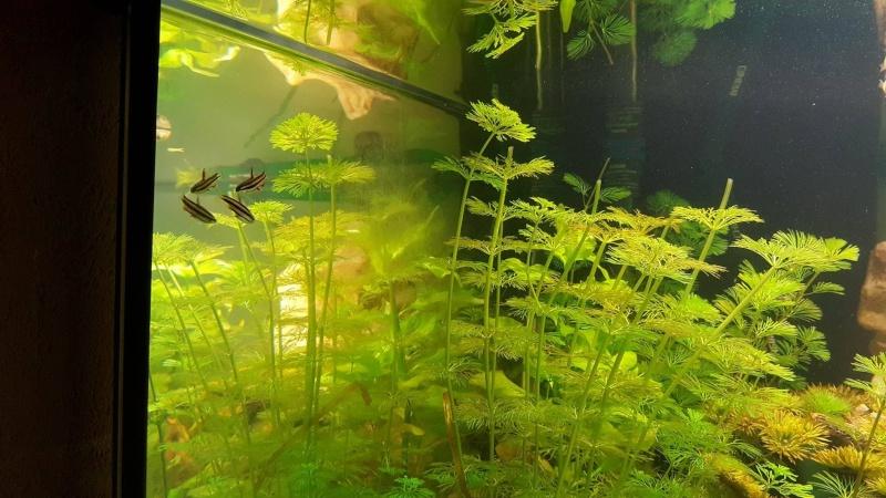 Aquarium plutot Amazonien 300 L Poisso10