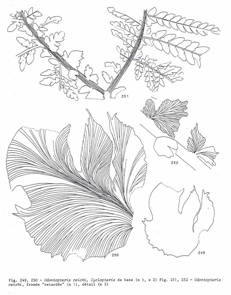 Flore Carbonifère des Alpes Françaises part 1 - Page 2 Img00610