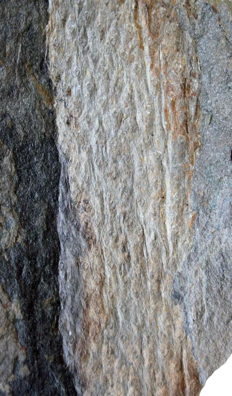 Flore Carbonifère des Alpes Françaises part 1 - Page 2 Img_3522