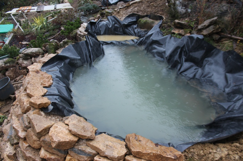 Agrandissement du bassin Img_3921